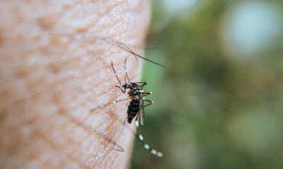 Piqure moustique - Ravi Kant