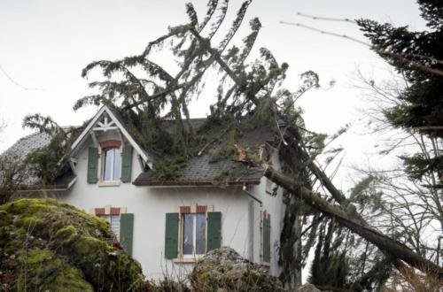 Un arbre plie sous la pression du vent à Montmollin (NE)