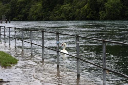 rhone-montee-des-eaux
